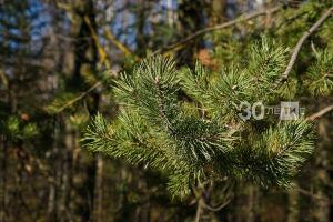В Татарстане рассмотрели более 250 жалоб на незаконное использование леса
