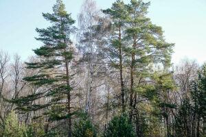 В Татарстане в 2020 году темпы восстановления лесов соответствуют вырубке