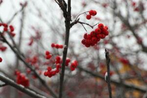В Татарстане ожидаются облачная погода и мокрый снег