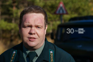 В Татарстане за незаконную рубку леса оштрафовали более 80 человек за 2020 год