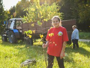 Озеленять Нижнекамск планируют новыми видами деревьев