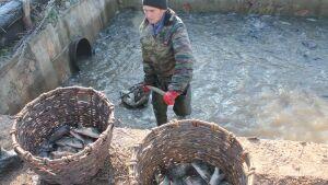 В Татарстане в водоем выпустили более 3 тыс. мальков сазана