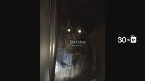 В Казани прохожие сняли на видео запертых в «ГАЗели» трех собак
