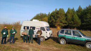 В Татарстане начали вакцинировать от бешенства лисиц и волков