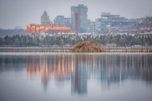 Напротив Казанского Кремля на Казанке поселилось семейство ондатр