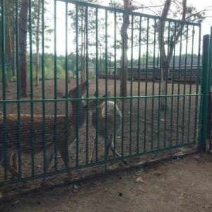 Госкомитет по биоресурсам РТ намерен забрать оленей из зоопарка Челнов через суд