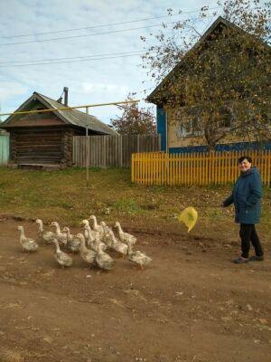 Семья из Агрызского района за два месяца выращивает четырехкилограммовых уток