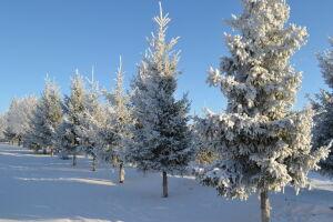 Зимой в казанских парках заработают более 20 нестационарных торговых точек