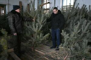 Спасские лесоводы дали советы по выбору новогодней елки