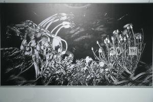 Казань попросит в дар у экс-фигурантки дела «Оборонсервиса» серию фото выставки