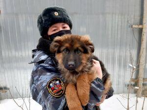В Ивановскую область отправили пять щенков овчарки из Казани на службу в колониях