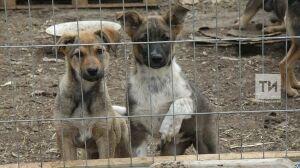 В 2019 году в Татарстане отловили свыше 19 тысяч бездомных животных