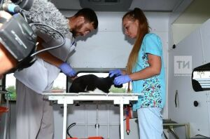 Жителям Вишневки из-за карантина предложили бесплатно вакцинировать питомцев