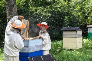 Татарстан изучает опыт Башкортостана по чипированию ульев