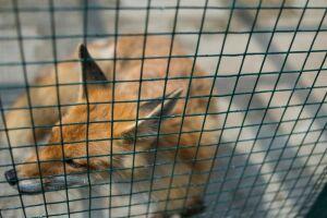 В Татарстане за пять лет число случаев бешенства у диких животных снизилось в 10 раз