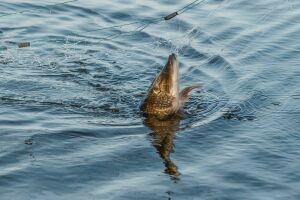 Благодаря 33 км искусственных нерестилищ в РТ ожидают воспроизводства 16 тонн рыбы