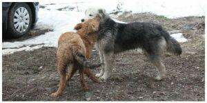В Чистопольском районе выявлено четыре новых случая бешенства среди животных