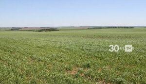 Зяббаров: Вся наша работа в земледелии нацелена на повышение продуктивности пашни