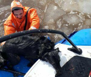 Тонущую собаку вытащили из Камы спасатели в Набережных Челнах