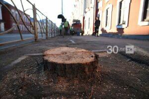 «Не пилите наши липы!»: казанцы оклеили уцелевшие деревья центра записками-оберегами