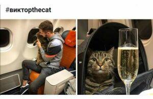 Знаменитый толстый кот Виктор приедет в Казань на поезде