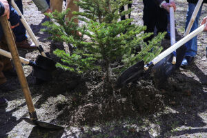 «Волонтеры Победы» проведут акцию «Сад памяти» во всех муниципалитетах Татарстана