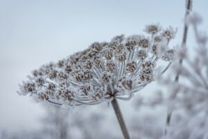 В Татарстане похолодает до 11 градусов ниже нуля