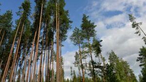Буинский район пополнится новыми саженцами благодаря нацпроекту «Экология»