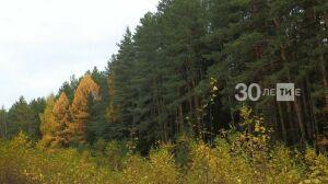 Лесники Татарстана удвоят площадь восстановления лесов в 2020 году до 4,7 тыс. га