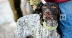 В татарстанских дворах могут установить площадки для выгула собак