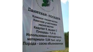 В Мамадышском районе высадили 5 тыс. саженцев сосны благодаря акции «Сад памяти»