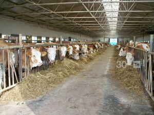 После принятия нового закона в Татарстане чипировать животных не будут