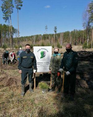 «Сад памяти»: в Зеленодольском районе высадили более 3,5 тысяч сосен