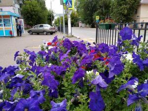 Елабугу в этом году украсят 120 тысяч цветов