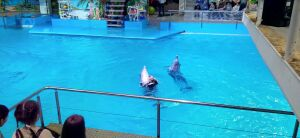 Первое онлайн-шоу челнинского дельфинария собрало 43 тысячи просмотров