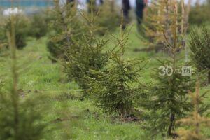 Более 2,1 тыс. гектаров леса восстановили в Татарстане по нацпроекту «Экология»