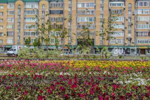 Улицы Казани украсят почти 2 млн цветов и 14 объемных фигур