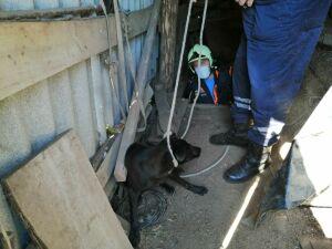 В Татарстане спасли пса, провалившегося в трехметровый погреб
