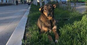 В Альметьевске начали чипировать бездомных собак