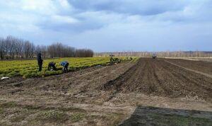 Мамадышские лесники выращивают саженцы для восстановления лесов в Татарстане