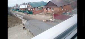 Прокуратура РТ добивается наказания для хозяина алабаев, растерзавших овчарку