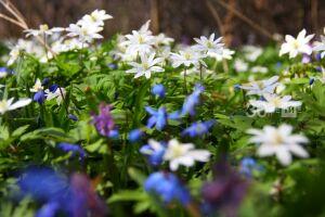 Профессор КФУ рассказал, чем удивила метеорологов эта весна в Казани