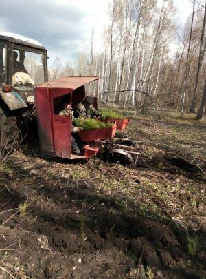 В Алькеевском районе разбили зеленую аллею, посвященную 100-летию ТАССР