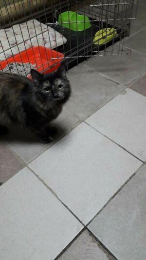 Челнинский приют показал, как поживает кошка, проносившая наркотики в колонию