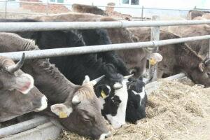 Начинающие фермеры Чистополя получили гранты на развитие своих хозяйств
