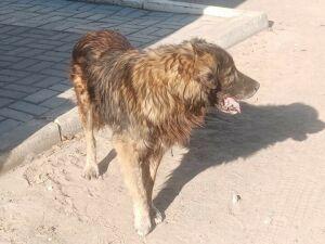 В Чистополе прошла бесплатная вакцинация кошек и собак