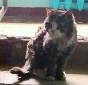 Пострадавшей при взрыве газа в пятиэтажке Казани кошке ищут новых хозяев