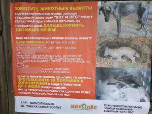 Казанские приюты просят неравнодушных проголосовать за поправки к Конституции РФ