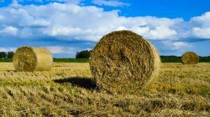В Татарстане приступают к интенсивной уборке многолетних трав