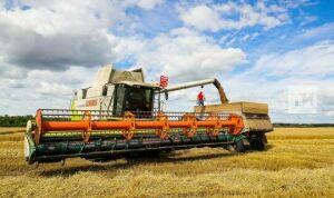 Марат Зяббаров рассказал, что уборку зерновых в РТ планируют начать в конце июля
